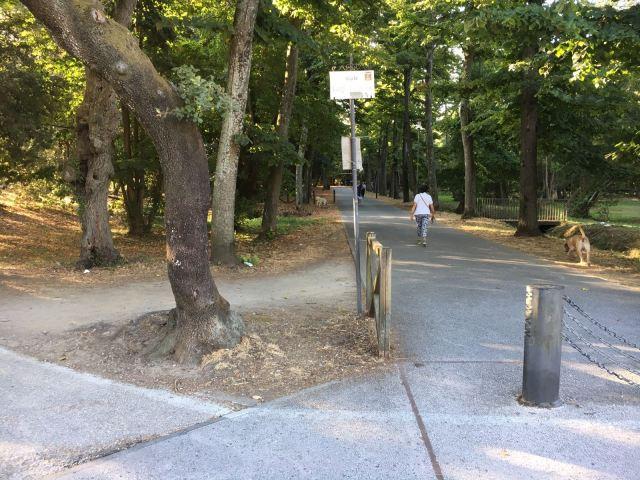 viale cadorna pineta di ponente ciclabile via zara